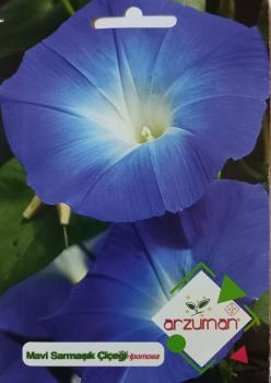 Mavi Sarmaşık Çiçeği Tohumu