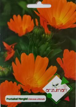 Portakal Nergisi Çiçeği Tohumu