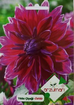 Yıldız Çiçeği Tohumu
